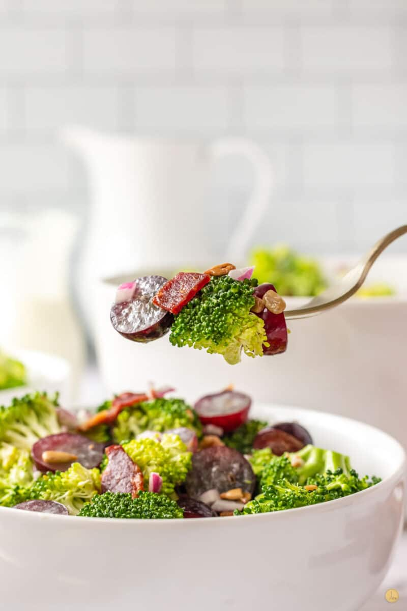 fork of salad